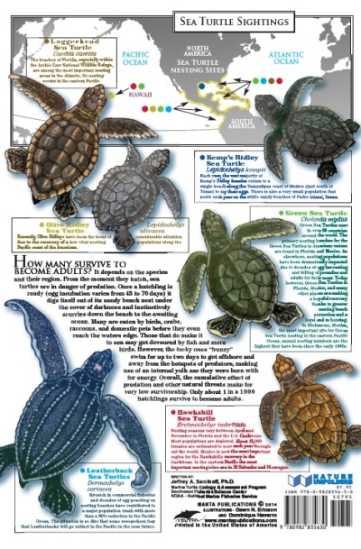 SEA TURTLE back cover sc