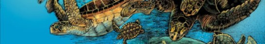cropped-sea-turtle-poster_03.jpg