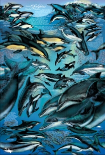 Dolphin-Poster_03