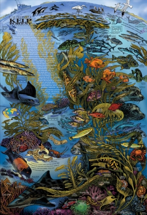 Kelp-Poster_03