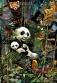 Panda-Poster_03