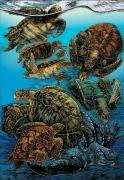 Sea-Turtle-Poster_03