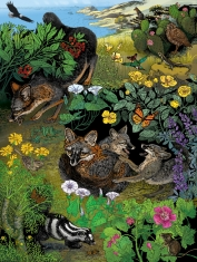 ISLAND FOX poster