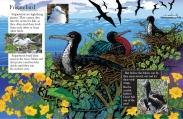FRIGATEDBIRD