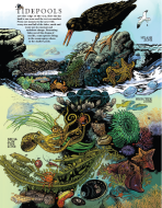 Tidepool poster.guide