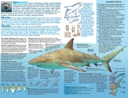 SHARK inside spread