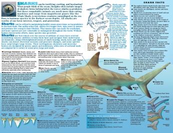 SHARK inside spread