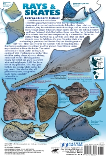 SHARKSback2