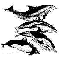COVER Dolphins