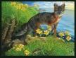 San Nicolas.ISLAND FOX.Coreopsis, Ericson
