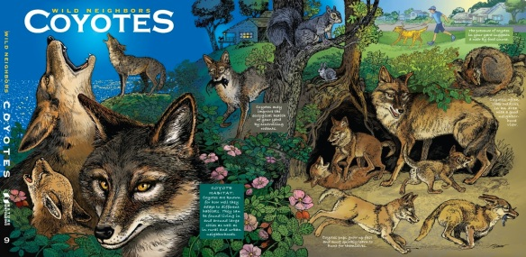 COVER POSTER Coyote