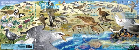 sc-sea-shores-2017-full-poster