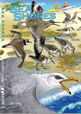 sea-shore-cover-sc