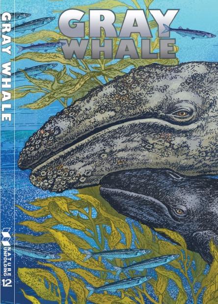 gray-whale-cover